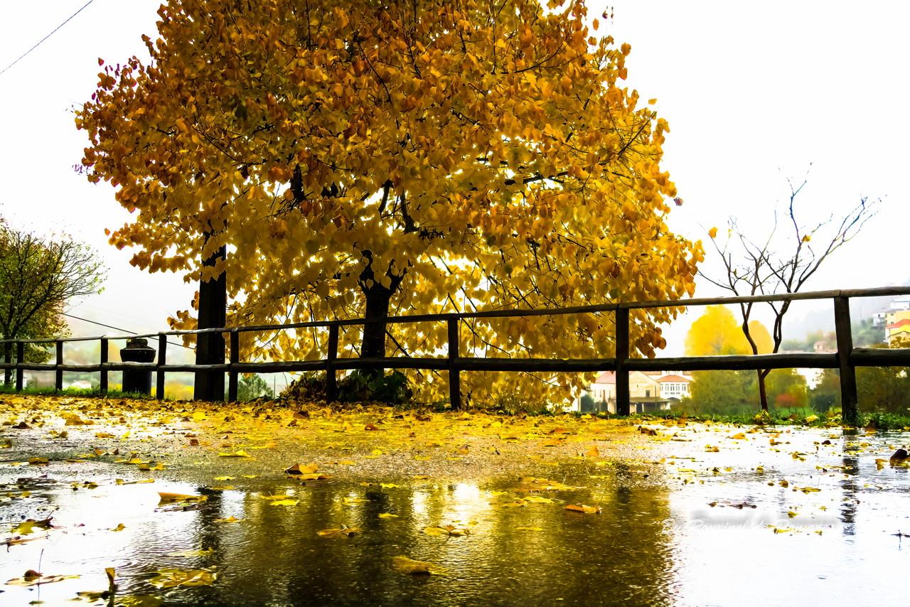 Outono em Pomares (4).JPG