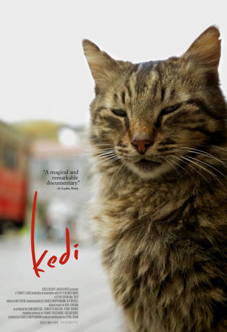 Kedi movie poster.jpg