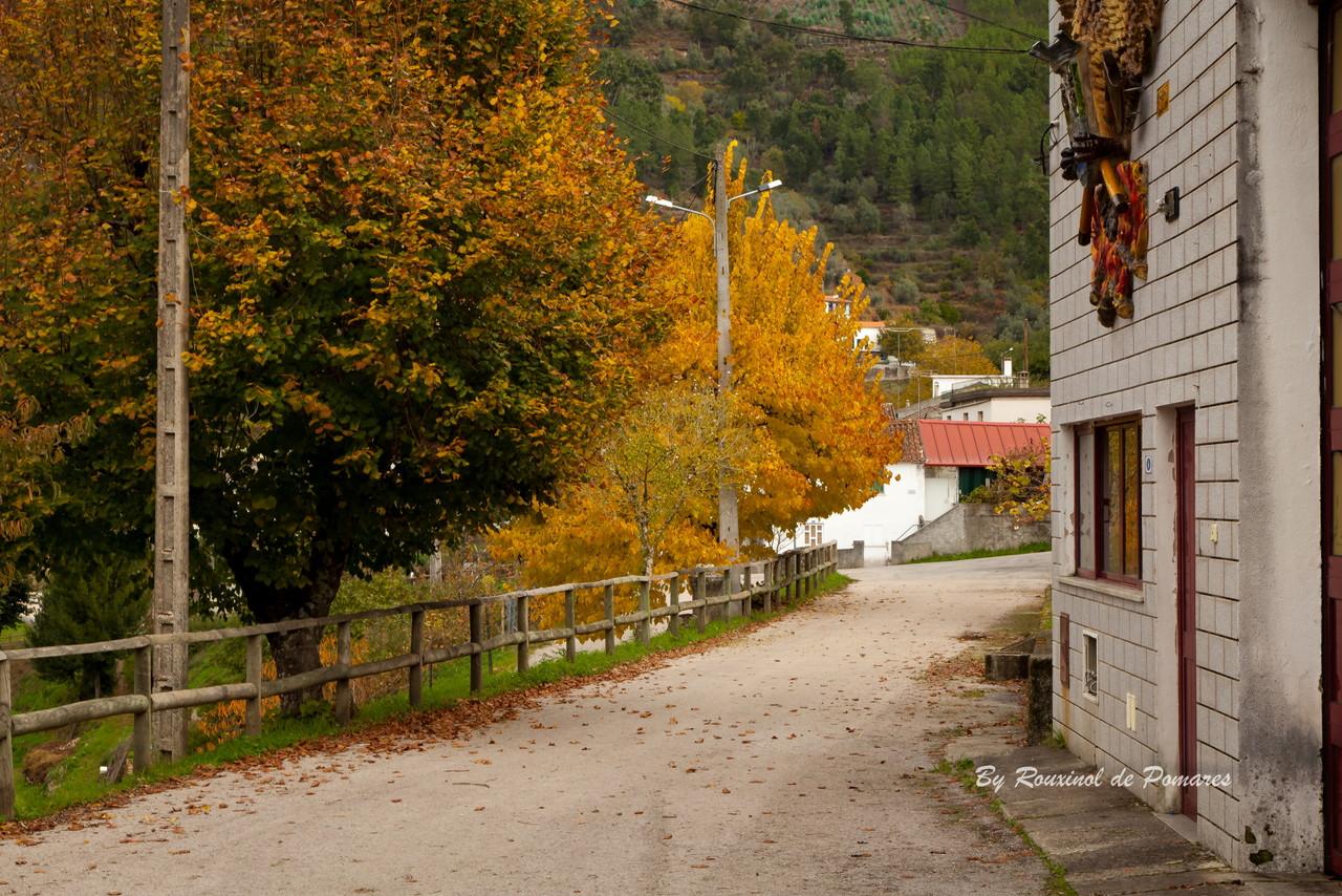 Outono em Pomares (8).JPG