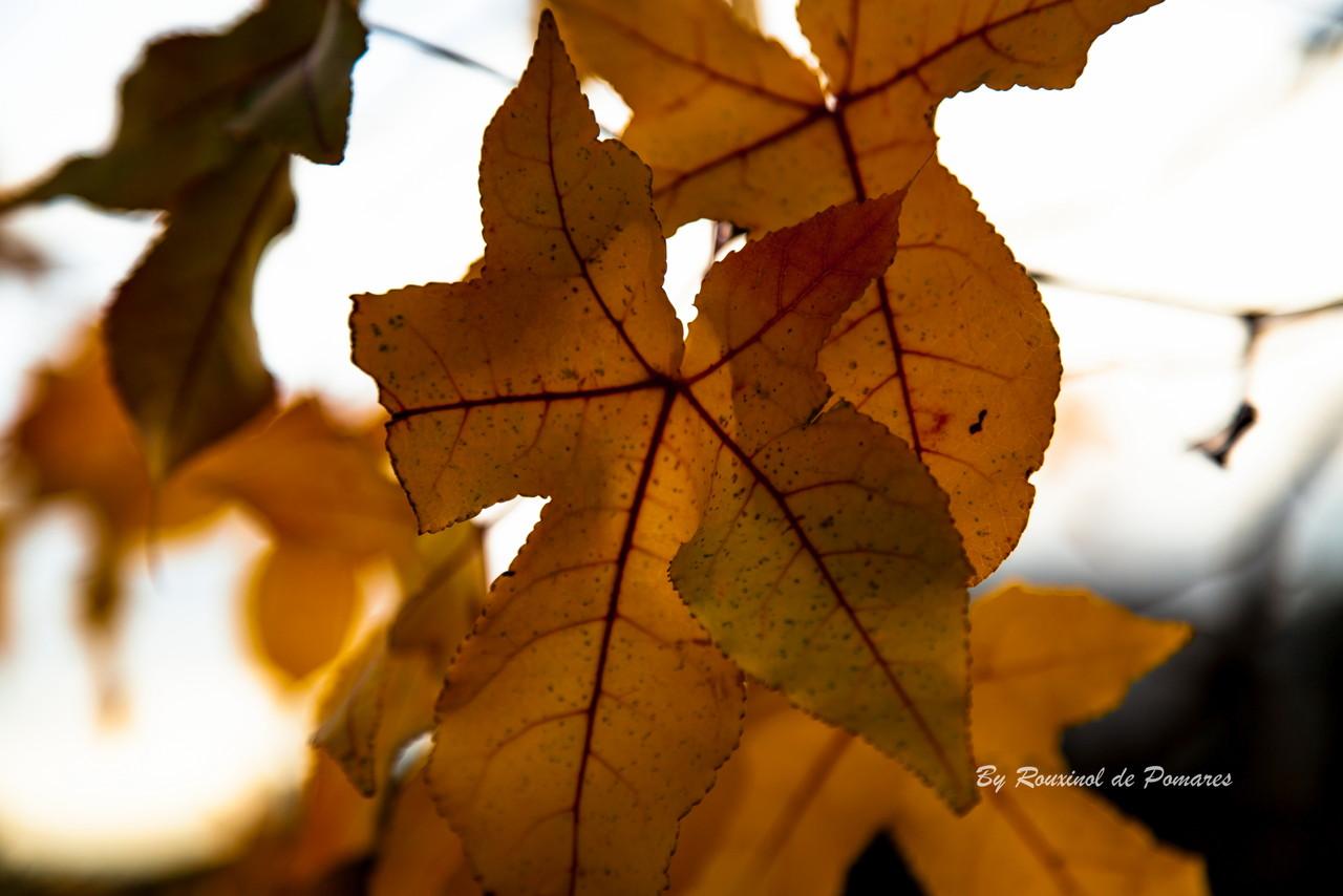 Outono em Murça (20).JPG