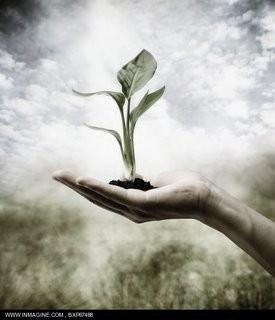 semente.jpg