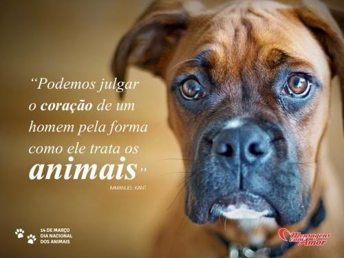 Imagem do dia dos animais.jpg