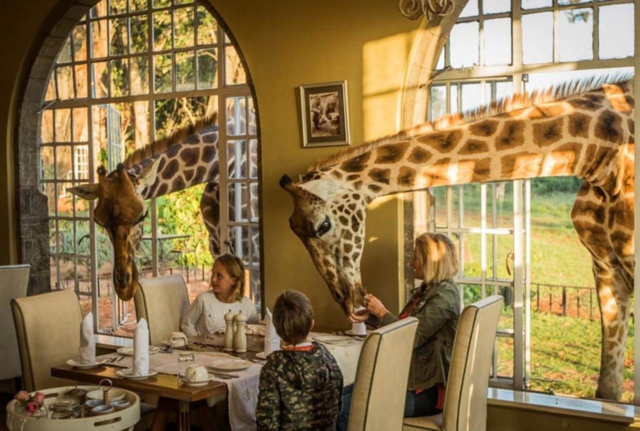 girafa2.jpg