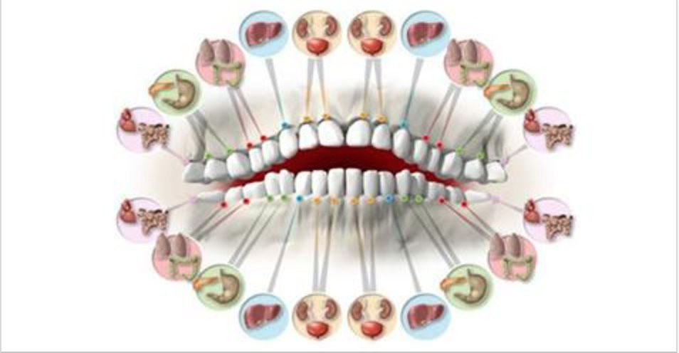 dentes_e_orgaos.jpg