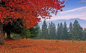 Arvore de outono.jpg
