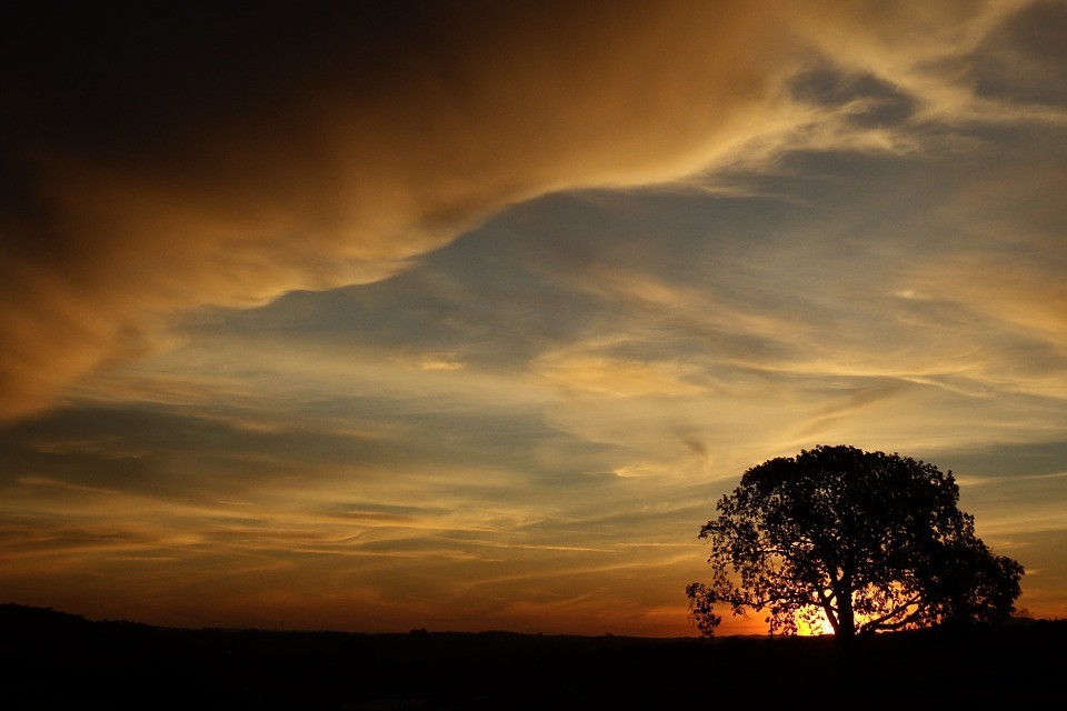 tree-476341_960_720.jpg
