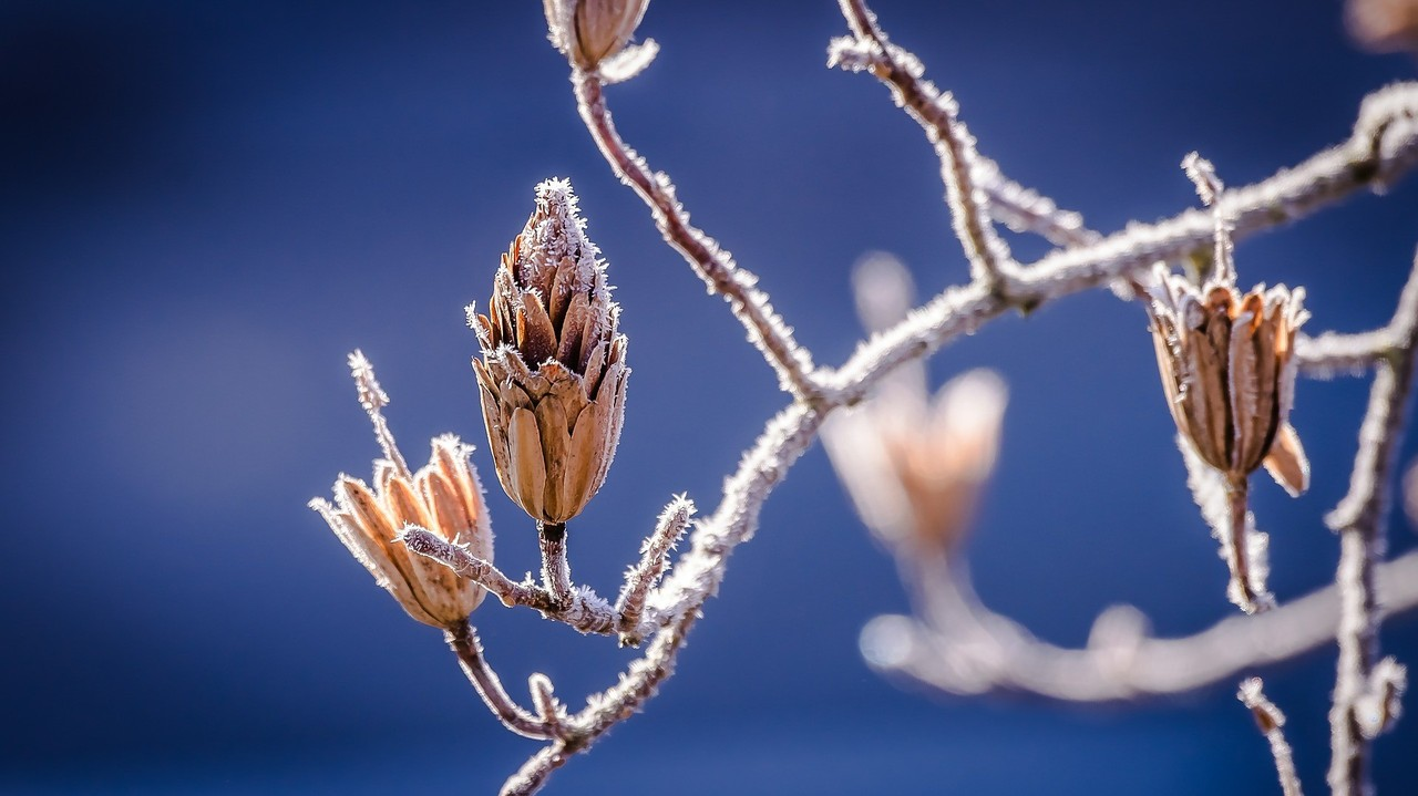 winter-598631_1920.jpg