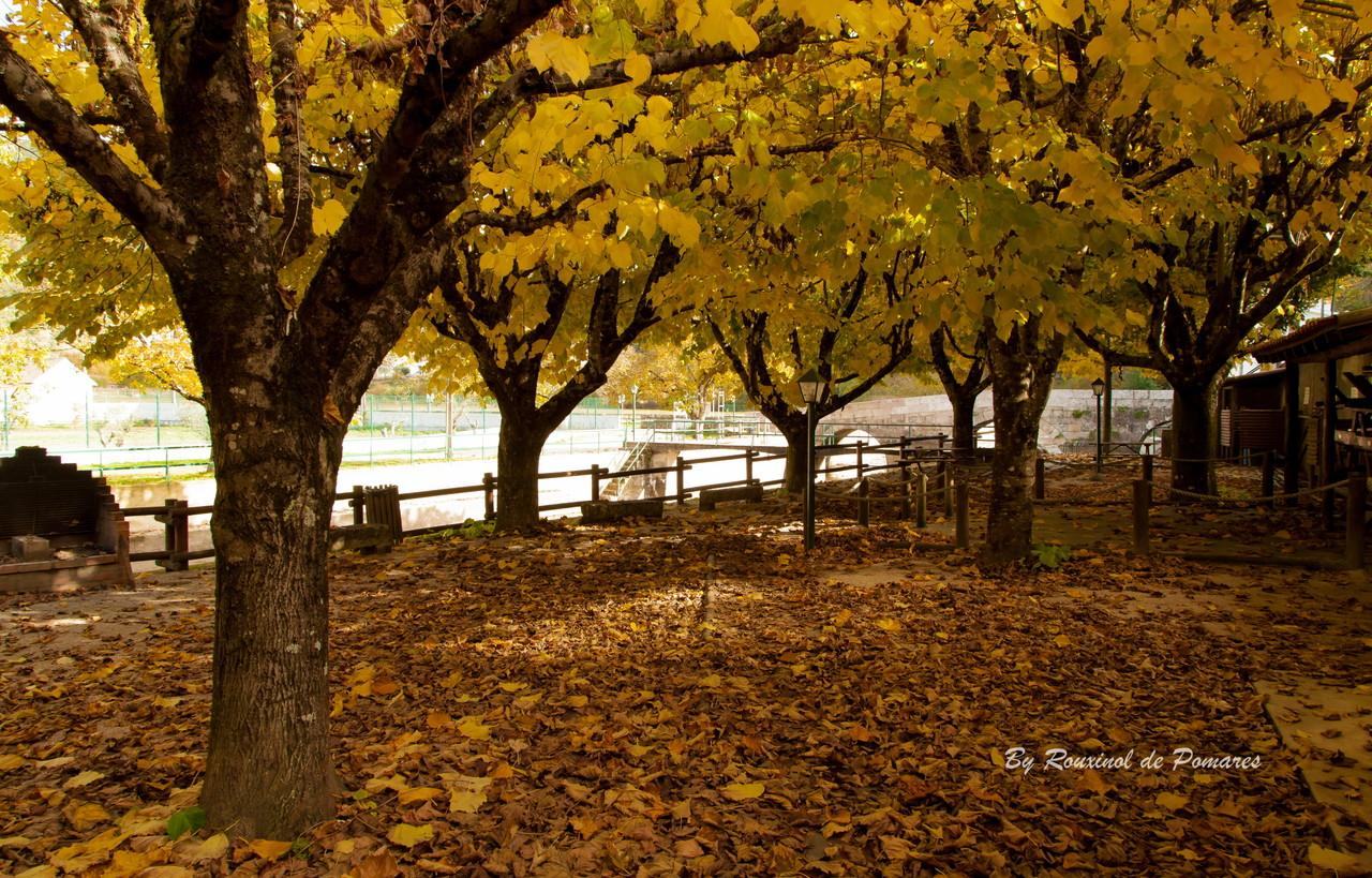 Outono em Pomares (13).JPG