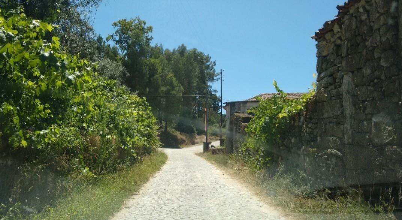 Vegetação 2.jpg