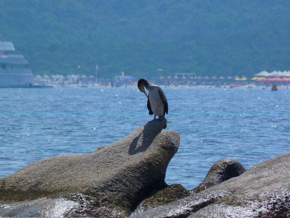 40 Praia Capriccioli.jpg