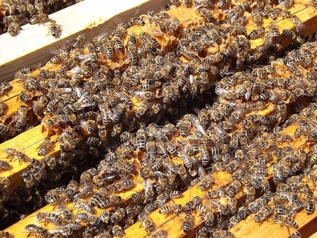 bees-486870_640.jpg