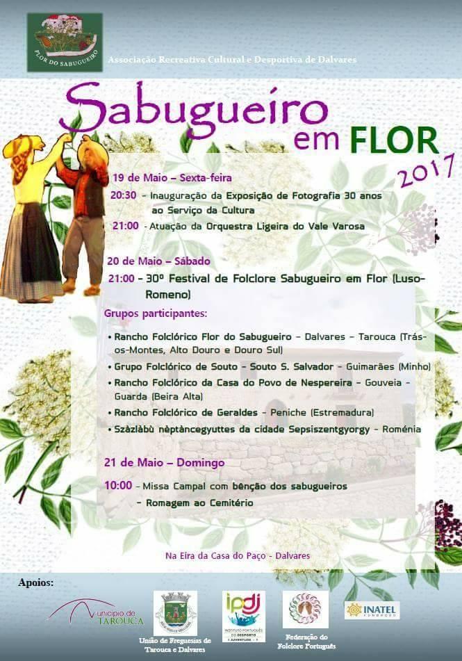 Sabugueiro em Flor 2017