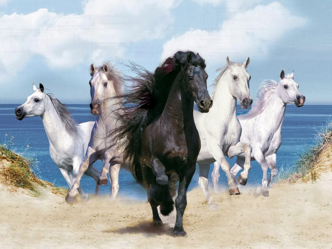 terral cavalo 5.jpg