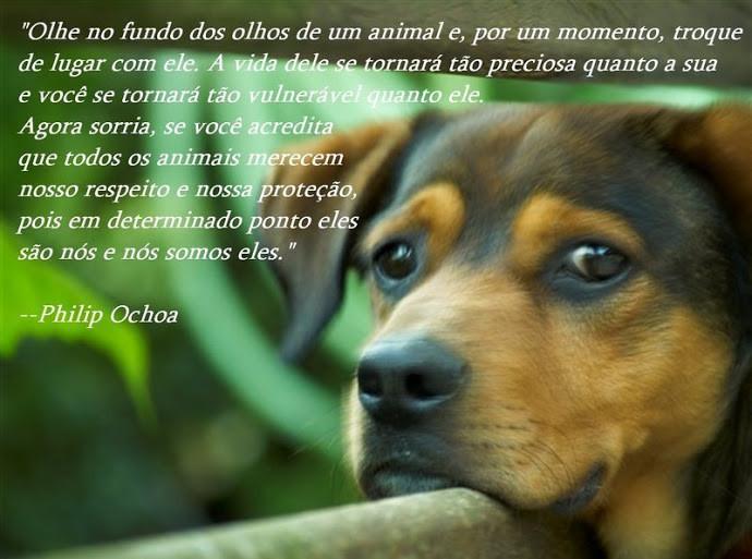 Frase sobre Animais.jpg