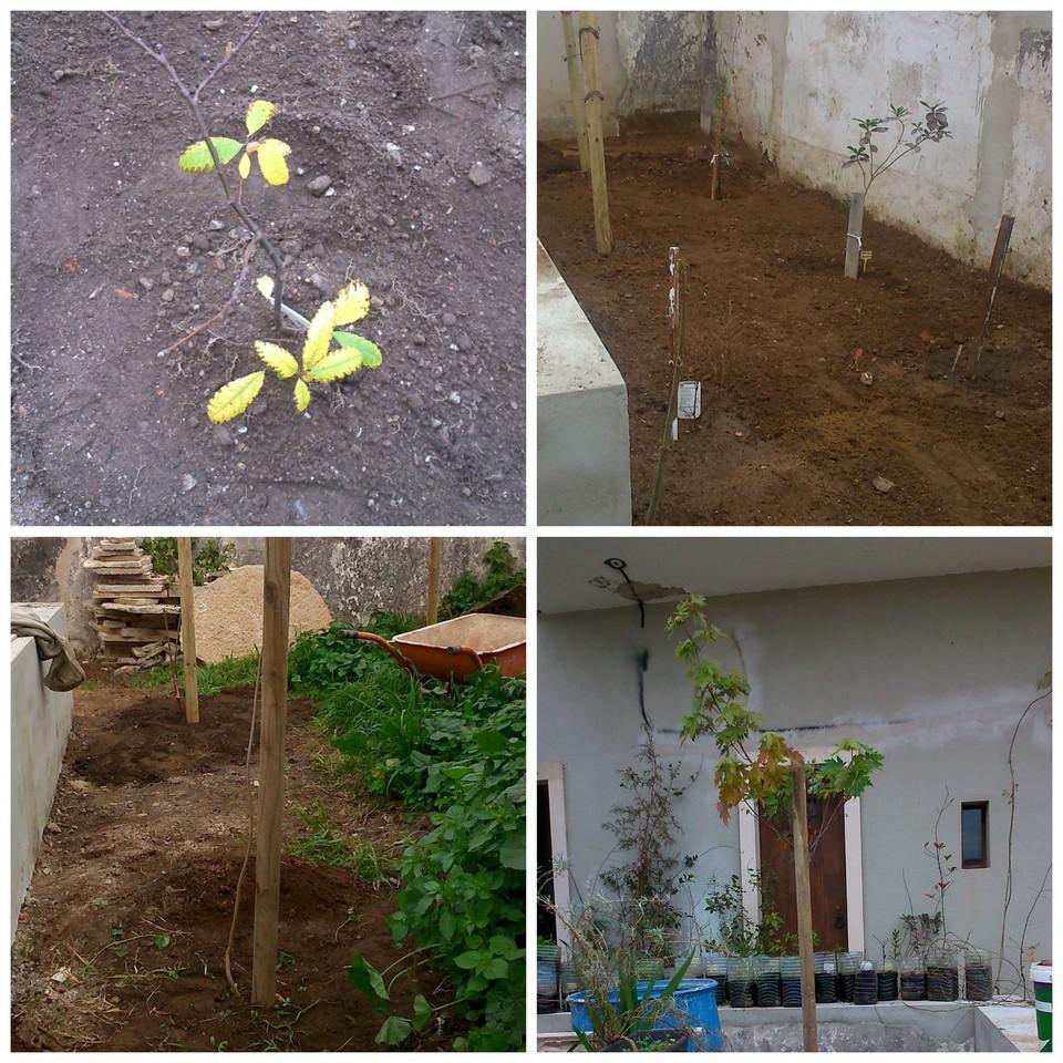quintal_plantações1.jpg
