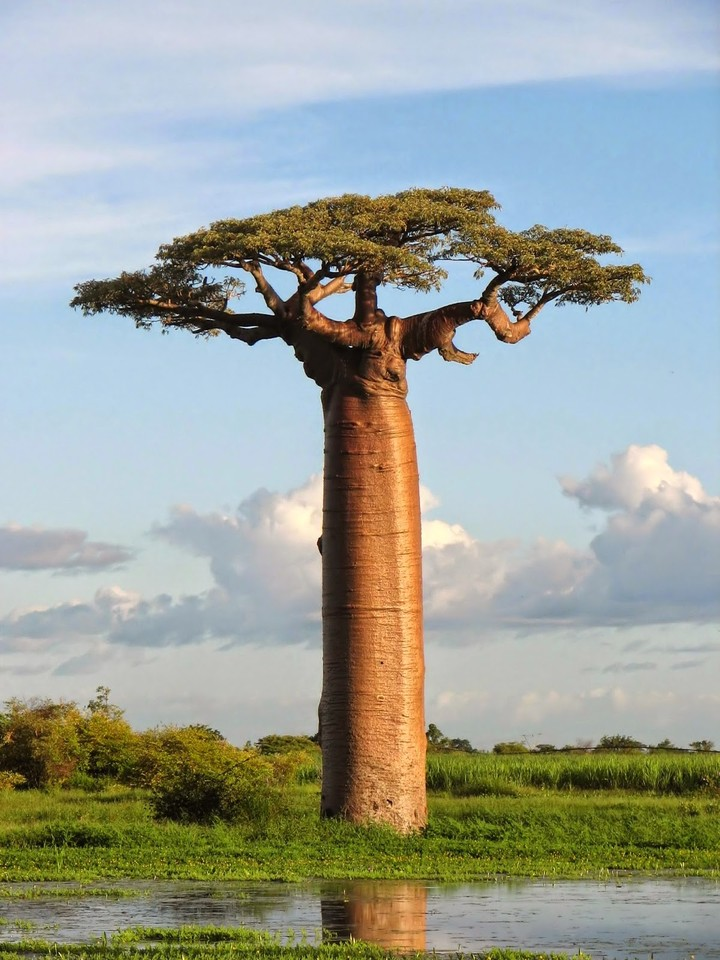 art-is-derived-from-natural-baobab-the-bottle-tree