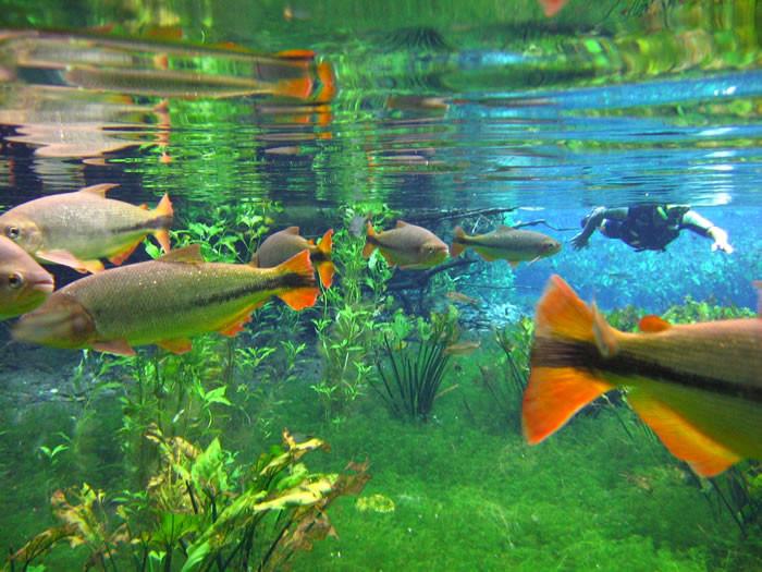 clearest-waters-to-swim-in-before-you-die-3.jpg