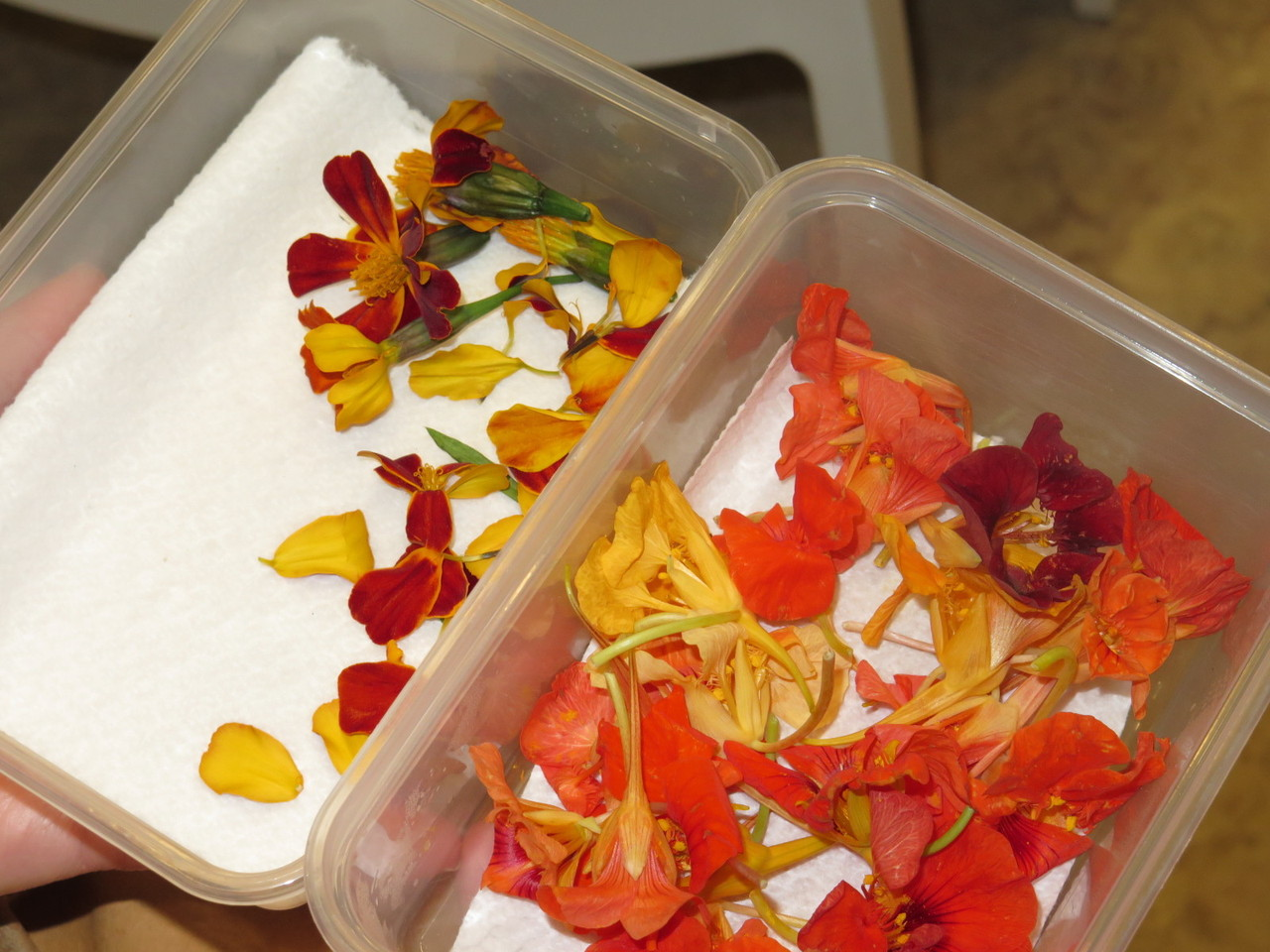 Flores da Herdade do Esporão