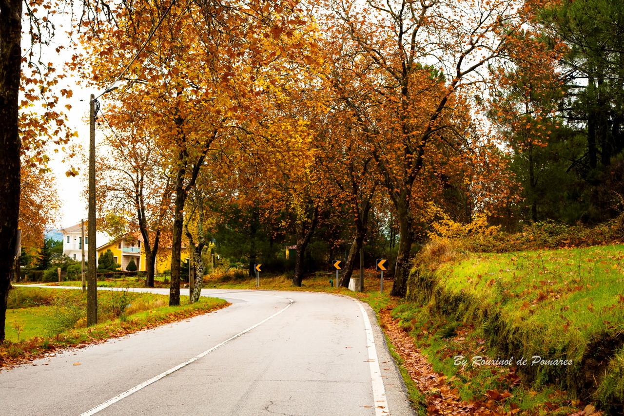 Outono no Fiolhoso (001).JPG