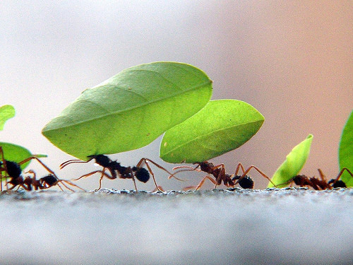 formigas-em-fila-carlos-weiker.jpg
