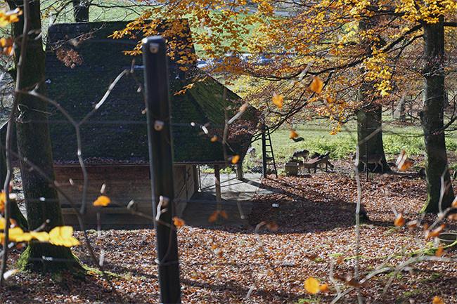 wildnispark_09.jpg