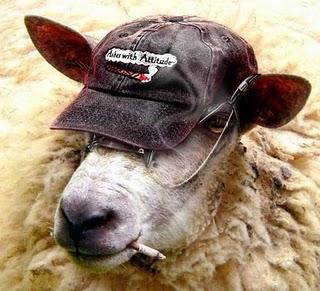 mouton-drole
