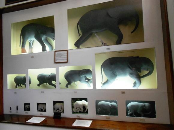 Museu História Natural - Maputo