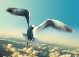 Aprender a voar.jpg