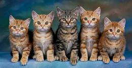 cinco gatinhosjpg