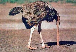 ostrich-large.jpg