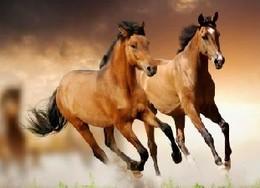 Two horses.jpg