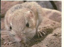 enciclopÉdia animal ratazana rato sãofalcão biologia e geologia