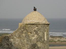 o pombo e a guarita
