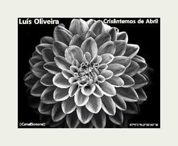 LUIS OLIVEIRA - CAPA.jpg
