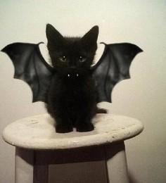 gato morcego.jpg