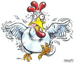 85b8b38edca9fc8997655a5303e4e744--chicken-humor-mo