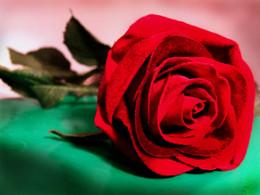 Uma flor para todas as mães