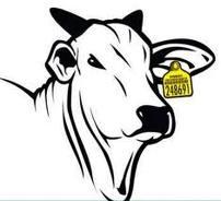 Brincos Walmur para identificação de bovinos