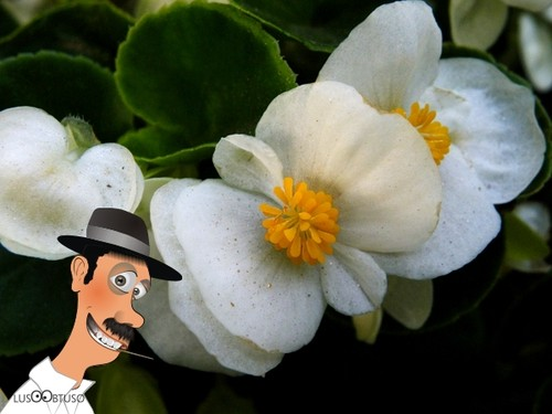flores ao natural