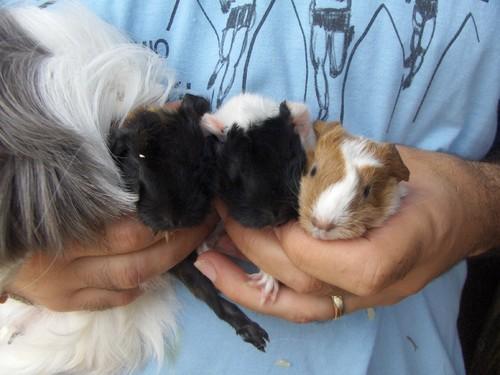 as 3 crias e a mãe