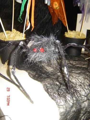 Aranha com pelo