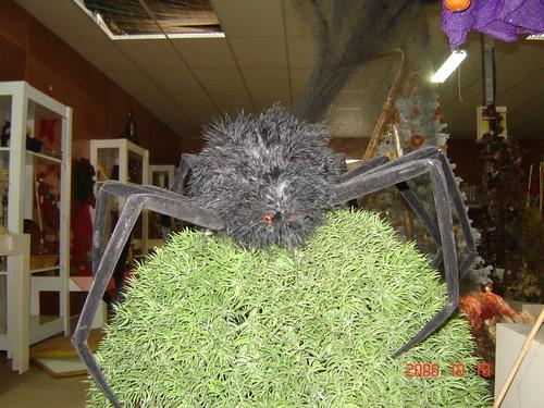 Aranha com 30cm diametro