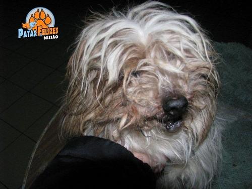 Animais Abandonados para Adopção. Adopte-me. Cães e Gatos
