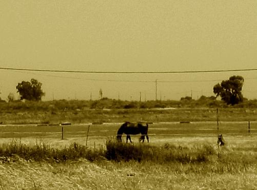 paraiso dos cavalos