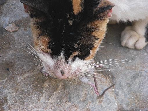 o rato que perdeu a corrida