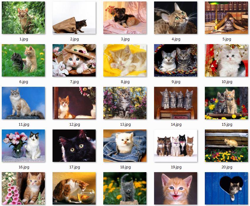 wallpapers de gatos