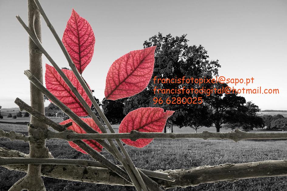 http://fotos.sapo.pt/francisfotodigital