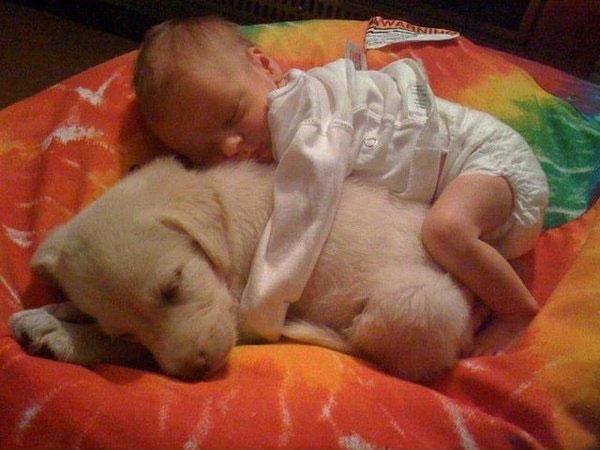 cão e bebé
