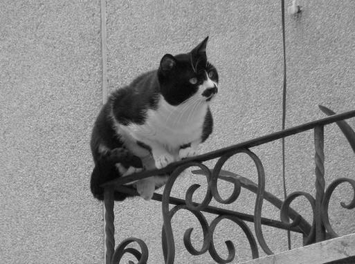 a curiosidade e o gato
