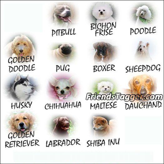 tag animais facebook identificar fotos